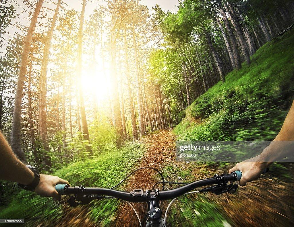 Mountain Bike: Singolo sentiero nella foresta : Foto stock
