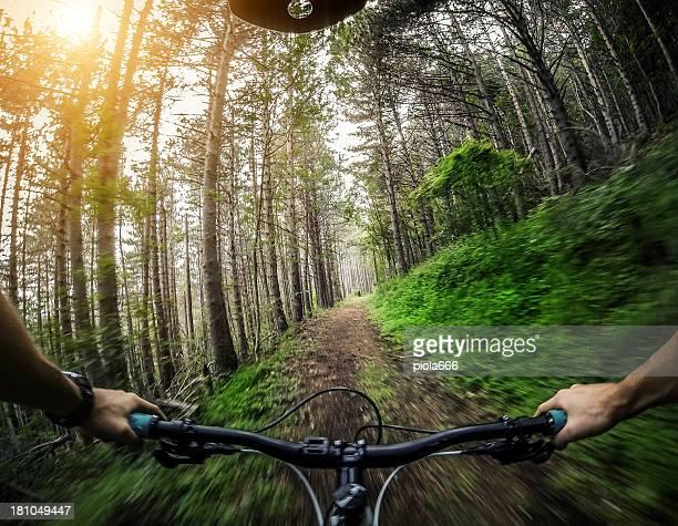 Bicicleta de montanha: Único caminho na floresta