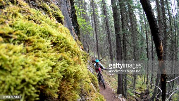 mountain biker rides along narrow mountain trail in the fores - forens stock pictures, royalty-free photos & images