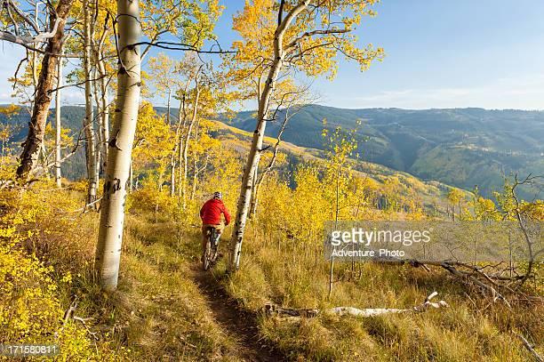 ciclismo de montaña singletrack en bosque de aspen - vail colorado fotografías e imágenes de stock