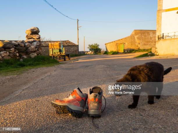 Mountain boots and a black cat on a rural road