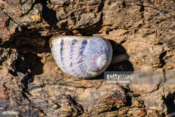 mountain cave snail - gunnar helliesen stock pictures, royalty-free photos & images
