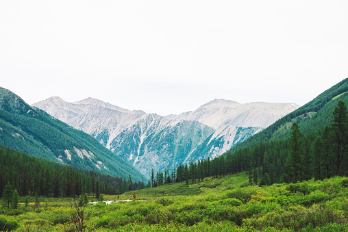 Mountain creek in valley against wonderful giant mountains. Rich vegetation and coniferous forest of highlands. Conifer trees. Amazing atmospheric landscape of majestic nature. 1056444482