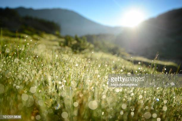 mountain dew, pirin mountain, bulgaria - dew stock photos and pictures