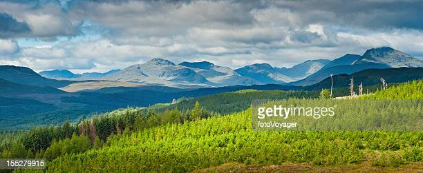 Mountain forest landscape Highlands light panorama Scotland
