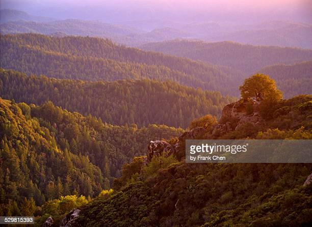 Mountain Forest Sunset, Castle Rock State Park, CA