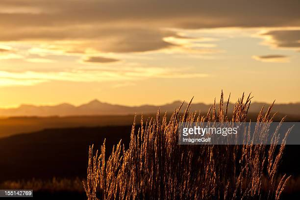 mountain grass backlit in the rockies - calgary stock pictures, royalty-free photos & images