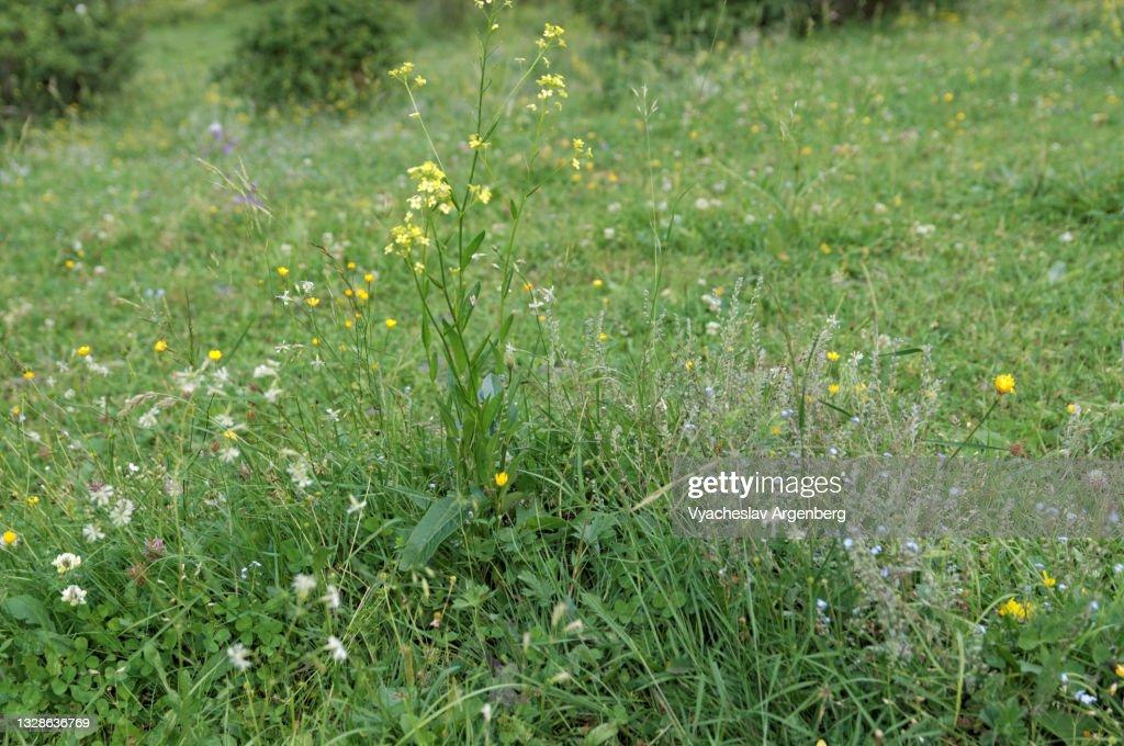 Mountain grass meadow near Shatili, Georgia : Stock Photo