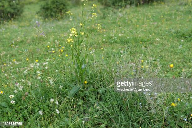 mountain grass meadow near shatili, georgia - argenberg stock pictures, royalty-free photos & images