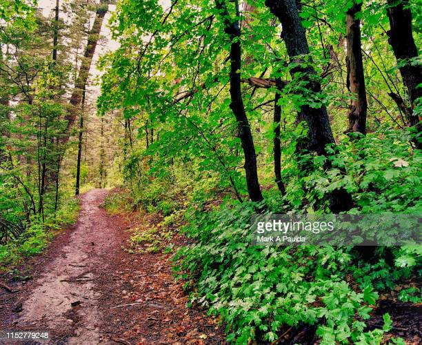 mountain hiking trail - national forest stock pictures, royalty-free photos & images