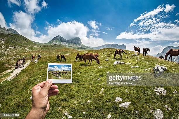 Mountain Pferde
