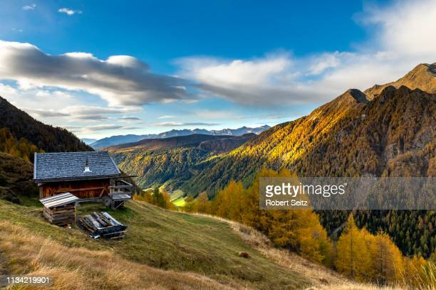 mountain hut over valley with autumnal mountain larch forest (larix decidua), vals, valstal, south tyrol, italy - european larch stock pictures, royalty-free photos & images