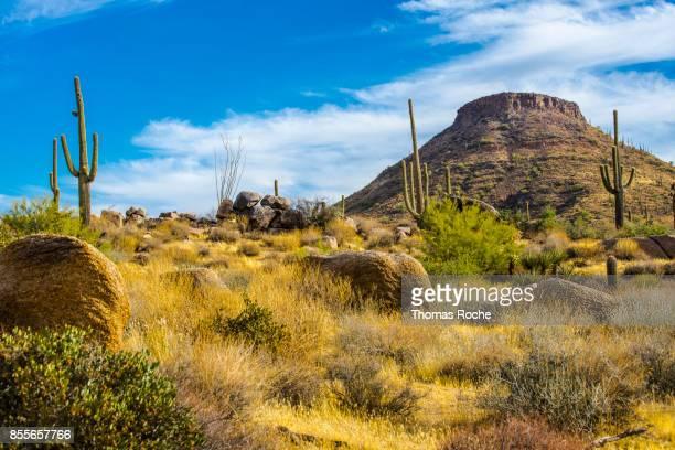 a mountain in the arizona desert - desierto sonorano fotografías e imágenes de stock