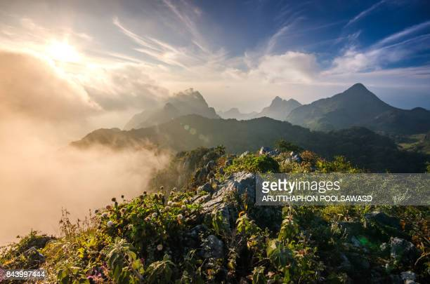 mountain in the mist rain forest chiangmai thailand - chiang mai province stock photos and pictures