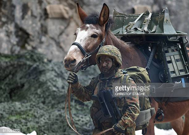 A mountain infantry soldier leads his pack animal during an exercise of the mountain infantry brigade 23 of the German Bundeswehr at an exercise area...