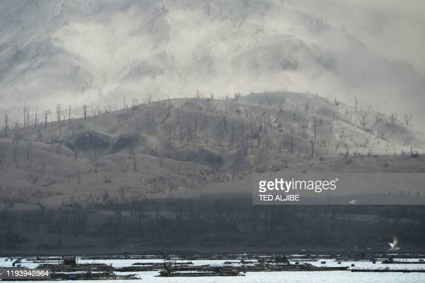 A mountain is seen covered in mud and ash due to the eruption of the nearby Taal volcano at a village in Laurel Batangas province on January 16 2020...