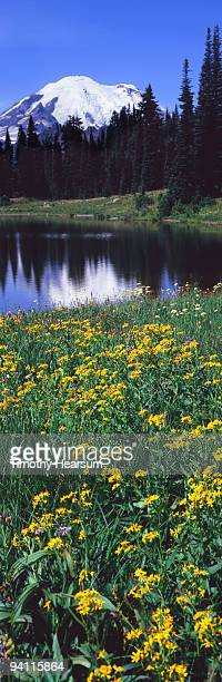 mountain, lake and wildflowers - timothy hearsum stock pictures, royalty-free photos & images