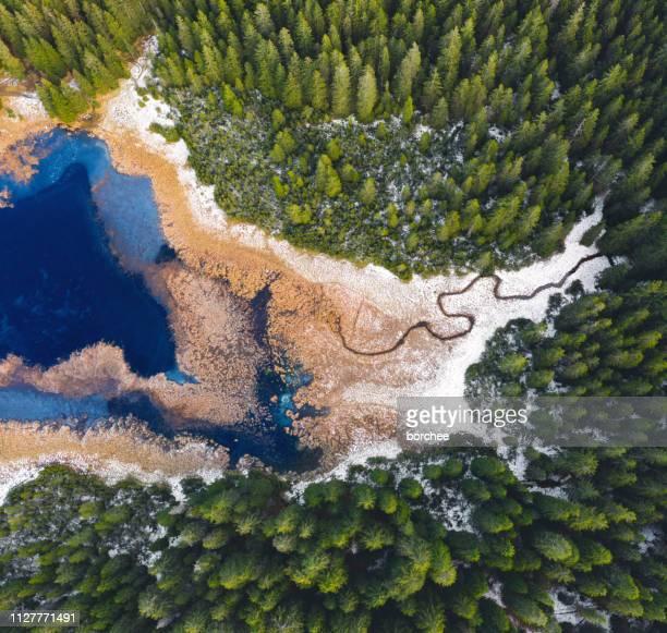 mountain lake from above - conifera foto e immagini stock