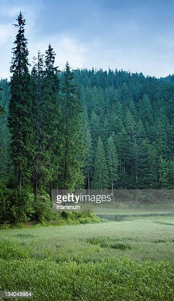 Mountain lake surrounded by green pine forest.