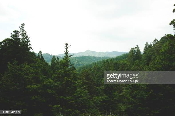 mountain landscape with forest - 自然 ストックフォトと画像