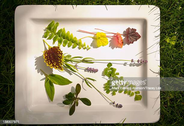 Mountain laurel, coleus, Queen Kimberly fern, lavender, ajuga and boston fern on platter