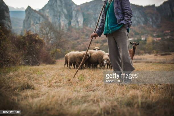 mountain life - shepherd stock pictures, royalty-free photos & images