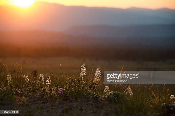 mountain meadow sunset - medford oregon stock photos and pictures
