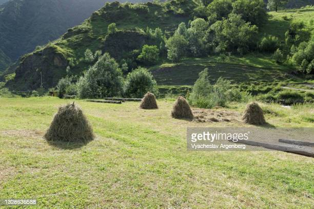 mountain meadows in shatili village, north caucasus, georgia - argenberg stock pictures, royalty-free photos & images