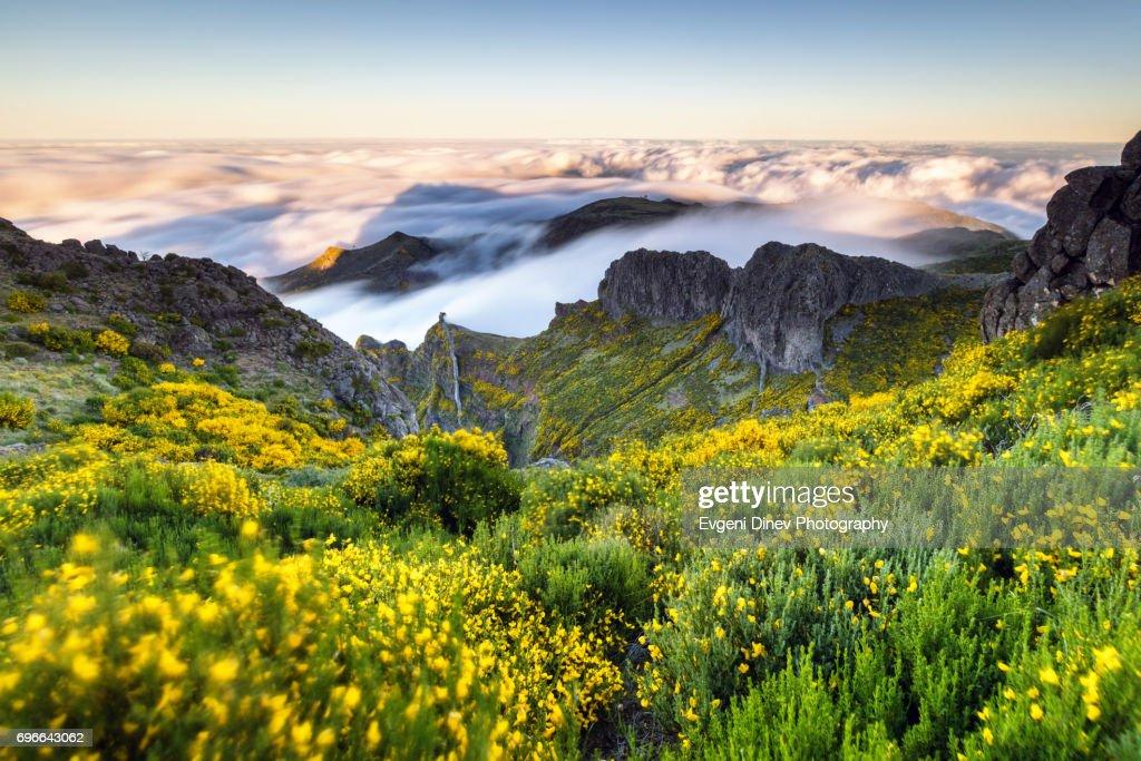 Madeira, Portugal - April 31, 2017: Mountain of Madeira, windy mountain meadow : Stock Photo