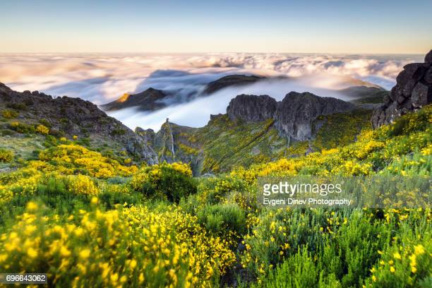 madeira, portugal - april 31, 2017: mountain of madeira, windy mountain meadow - madeira stock photos and pictures