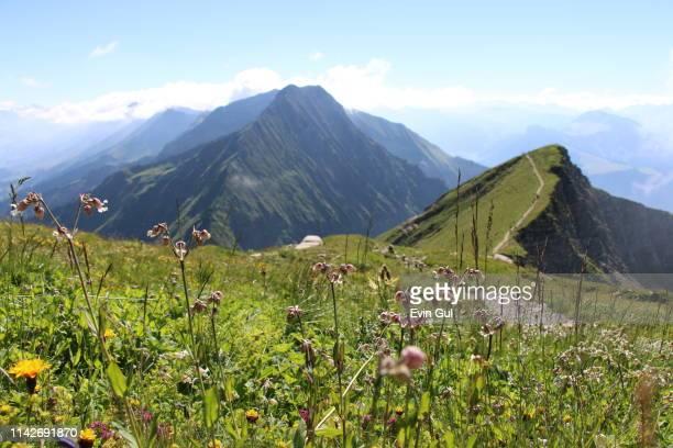 mountain of niesen. nature paradise in bern. switzerland - alpen stock-fotos und bilder