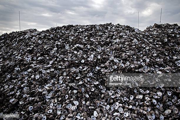 A mountain of oyster sheels lies outside the BP oil spill cleanup operations center on May 4 2010 in Hopedale LA Experts are worried that the...