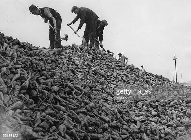 Mountain of sugar beet in Peterborough. About 1935. Photograph.