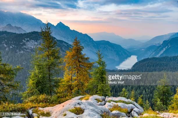 mountain panorama, view over the koenigssee from the feldkogel, on the left watzmann suedspitze and watzmann-kinder, on the right funtenseetauern, sunset, berchtesgaden national park, berchtesgaden area, upper bavaria, bavaria, germany - watzmann massif stock photos and pictures