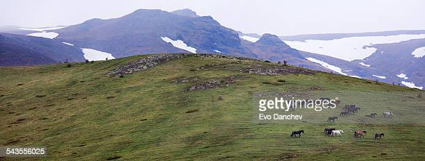 Mountain pasrure and horse herd