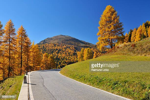 Mountain pass with colorful larch trees