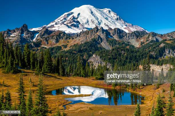 mountain peak above forest - mt rainier stock pictures, royalty-free photos & images