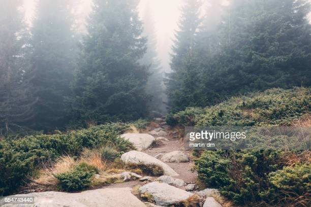 mountain - wilderness stock pictures, royalty-free photos & images