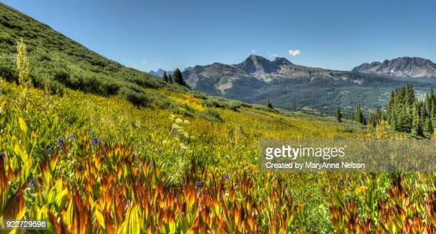 mountain range and colored corn lilies - カリフォルニアバイケイソウ ストックフォトと画像