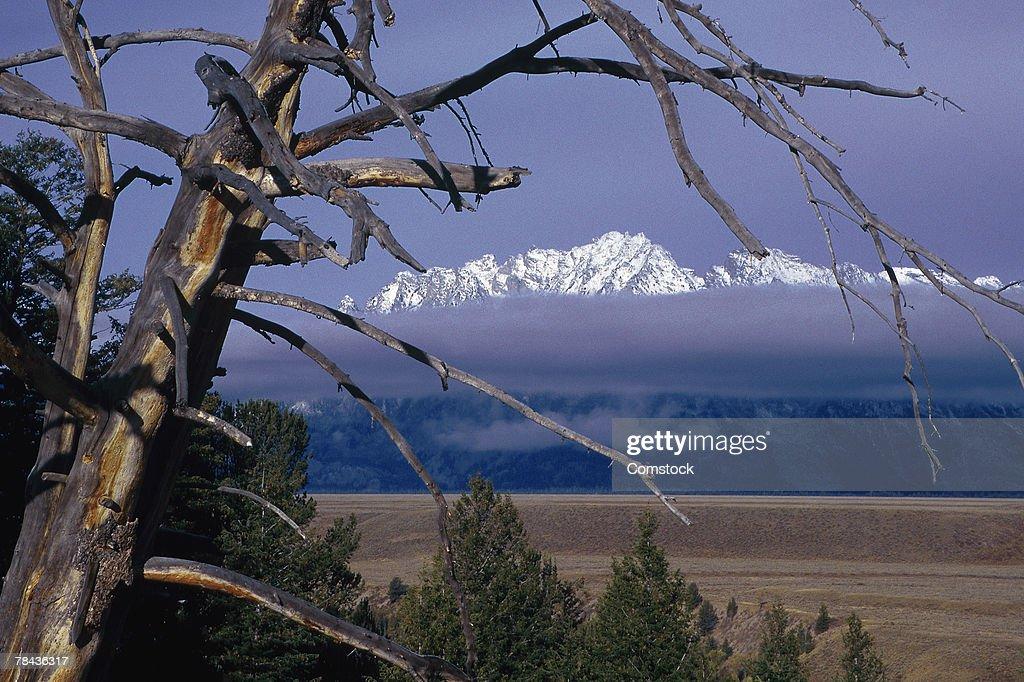 Mountain range in Grand Teton National Park : Stockfoto
