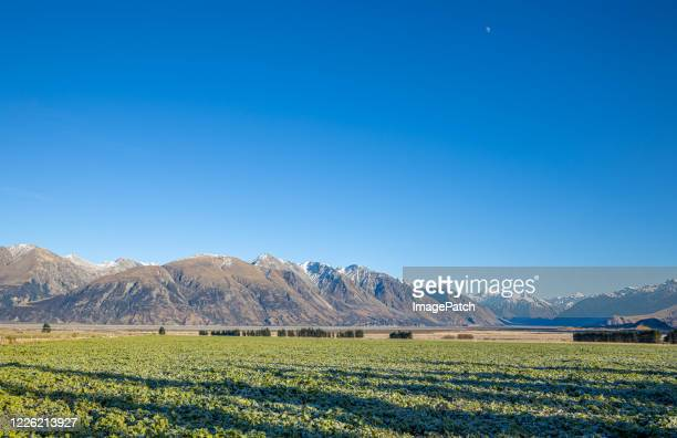 mountain range on a clear winter's day with a farmer's frosted feed crop in foreground - alpes neozelandeses fotografías e imágenes de stock