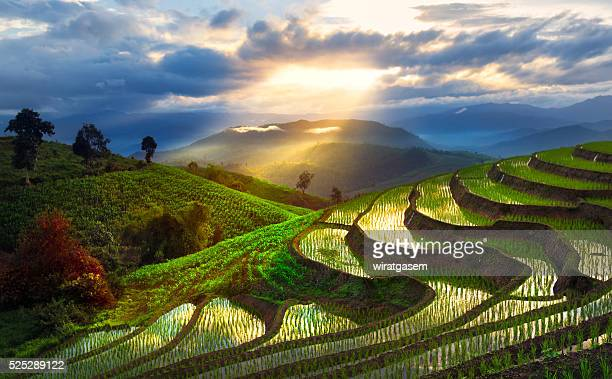 mountain rice field at chiang mai, thailand - chiang mai province stock photos and pictures