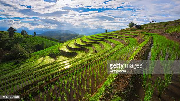 Mountain rice field at Chiangmai of Thailand