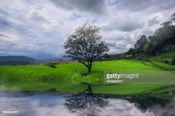 mountain rice field at chiangmai of thailand - wiratgasem stock photos and pictures
