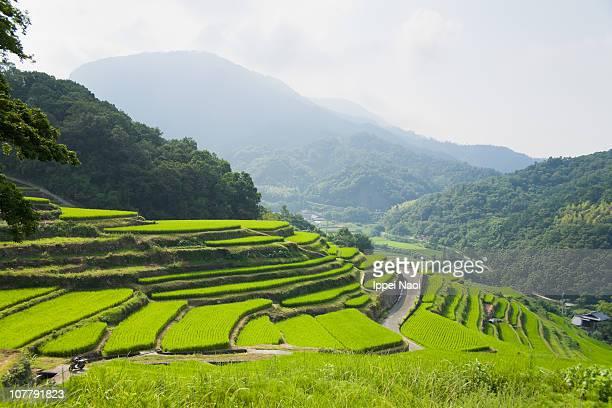 mountain rice terraces in the coutryside of japan - rice terrace stockfoto's en -beelden