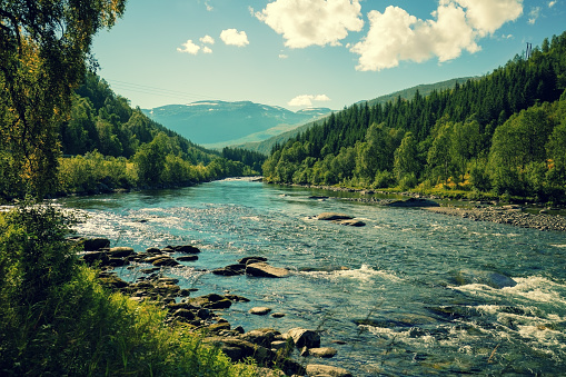Mountain river in autumn. Norway 637585790