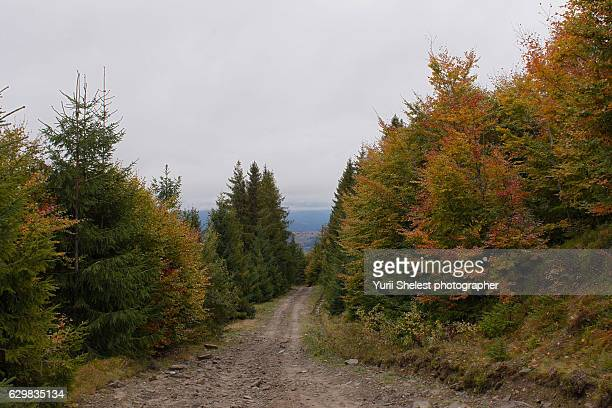 Mountain road in the autumn forest
