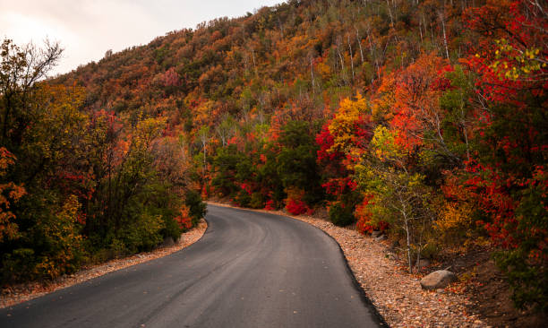 A Mountain Road Running Through Colorful Foliage