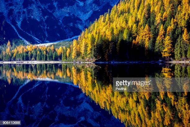 mountain rocks and autumn forest reflected in water of braies lake, dolomite alps, italy - larch tree stock pictures, royalty-free photos & images