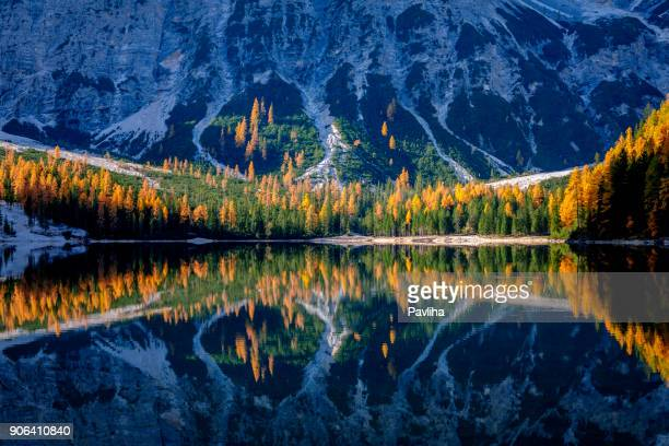 mountain rocks and autumn forest reflected in water of braies lake, dolomite alps, italy - dolomites stock pictures, royalty-free photos & images